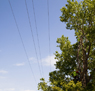 Trees Power Lines Icon (1)